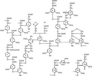lignine_2